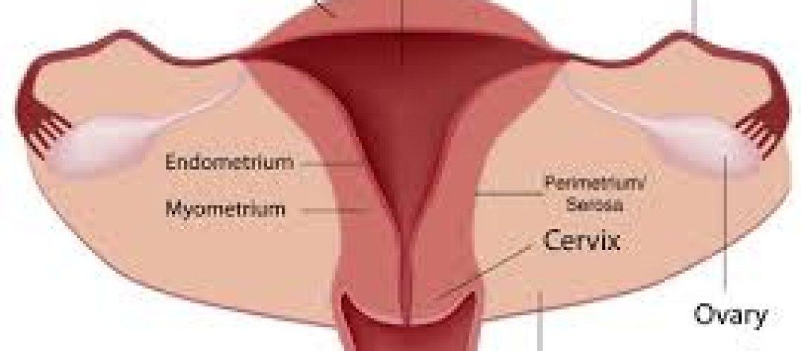 The Uterus: